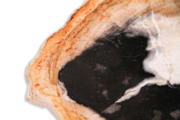 SOW versteinertes Holz Untersetzer - SOW Untersetzer - closeup1